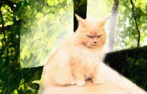 Katten Sindra